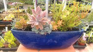how to make succulent planter boxes diy toy elephant succulent