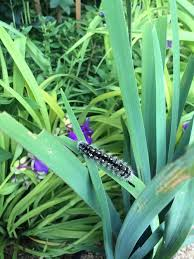fort pond native plants plant blog u2014 native ny