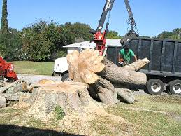 tree removal company in florida pete and s tree service