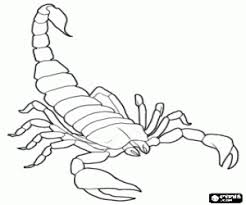 scorpion coloring pages preschool and kindergarten