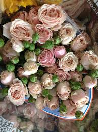 wholesale roses spray sweet 4 tune sold in bunches of 10 stems from the