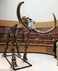 woolly mammoth japanese scientists u0027to resurrect extinct giant
