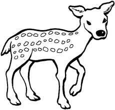 deer coloring pages printable image fawn
