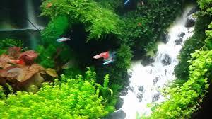 Aquascapes Com Aquascape Waterfall Youtube
