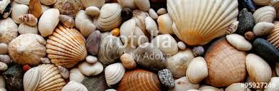 assorted seashells sea shells seashells panorama assorted shells pebbles back