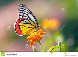 butterfly on a flower stock image image of pattern flower 23417093