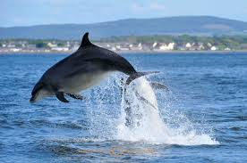 dolphin leaping cetation water free wallpaper of dolphins