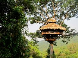 Famous Tree Houses | experience with 8 most famous tree houses in asia