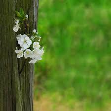 imagenes zen gratis stock de fotos gratis flores toutouke april 15 2013 70