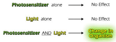 Light Independent Reactions Definition Basic Photosensitization