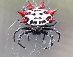 10 coolest spiders in the world 10 most today