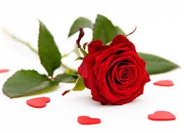 valentines roses valentines day startupcorner co