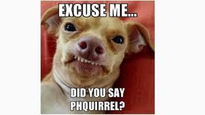 Ph Memes - 15 best tuna the dog memes