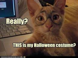 Halloween Cat Meme - funny cat really this is my halloween costume