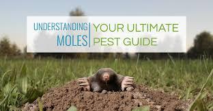 Moles Blind Understanding Moles Your Ultimate Pest Guide