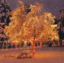 snow falling tree pictures photos and images for