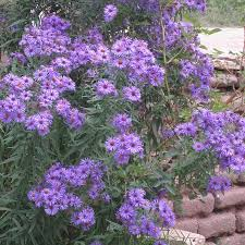 Flowering Shrubs New England - perennial plants sustainable gardening high country gardens