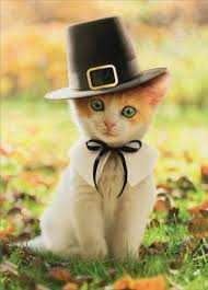 pilgrim cat kitten thanksgiving card by avanti press
