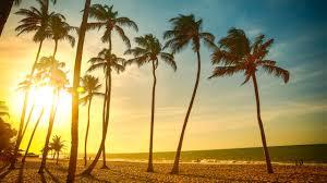 Palm Tree Wallpaper Landscape Tropical Beach Palm Trees Sun Wallpapers Hd