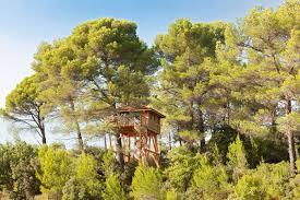 famous tree houses treehouses a new book