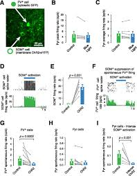 target specific effects of somatostatin expressing interneurons on