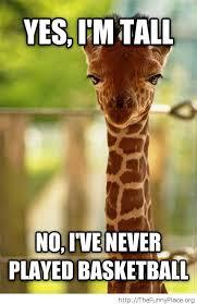 Giraffe Meme - funny giraffe meme i am tall no i have never played basketball image