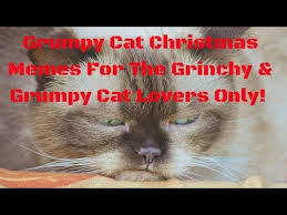 Cat Christmas Memes - grumpy cat christmas memes for the grinchy grumpy cat lovers only
