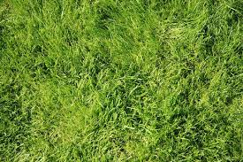 free stock photos rgbstock free stock images grass