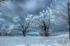 frosty trees photograph by william reek
