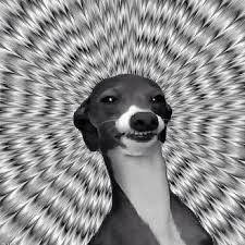 Stoned Dog Meme - image result for stoner dog the stoned dog meme collection