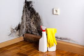 Remove Mold From Walls In Bathroom Mold Removal How To Get Rid Of Black Mold Zillow Digs