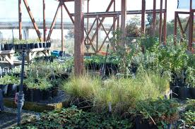 native plant nursery brisbane saving the natives of san bruno mountain