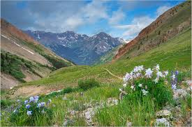Colorado landscapes images Columbine welcome the morning in this colorado landscape image jpg