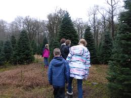 hedlund trees offers famous quality christmas trees graysharbortalk