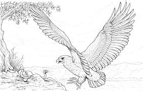 special eagle coloring pages inspiring colorin 7464 unknown