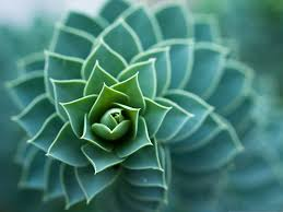 beautiful plants nature plants picture beautiful and spiral plant wide open leaves