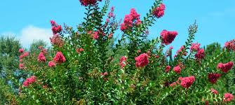 texas native plants list wholesale and retail nursery and landscape and irrigation services