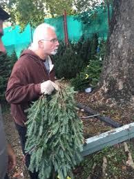 rudolph u0027s christmas trees christmas trees 2401 south lamar