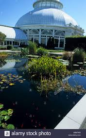 Botanical Garden In Bronx by New York Botanical Garden Bronx Pond Water Lilies Pond Goldfish