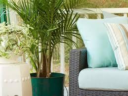 Low Light Indoor Trees Best 25 Majesty Palm Ideas On Pinterest Pool Plants Pool