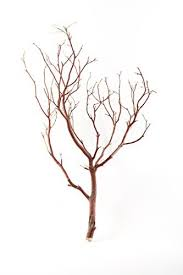 manzanita branches for sale koyal wholesale real manzanita branches 12 inch
