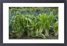 cheap vegetable garden sun find vegetable garden sun deals on