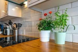 plants for on top of kitchen cabinets plants to decorate kitchen cabinet tops the home