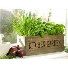 Kitchen Herb Garden Design 101 Best Kitchen Herb Garden Images On Pinterest Gardening
