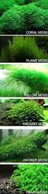 actually most of these if not all are not true mosses easier to