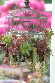 succulent house garden beautiful succulents in hanging pots succulent with
