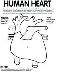 16 best human body circulatory system images on pinterest life