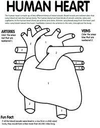 best 25 apologia anatomy ideas on pinterest human body crafts