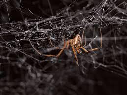 Male Spider Anatomy Communication Spiderbytes