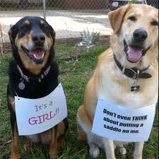 gender reveal announcements 10 baby announcements with dogs that will make you squee rover